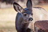 7638 Deer