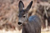 7640 Deer
