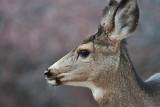 7718 Deer.jpg