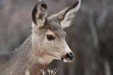 7720 Deer