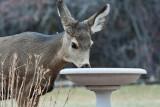 7721 Deer