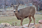 7724 Deer