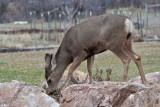 7725 Deer