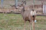 7726 Deer