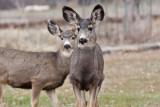 7730 Deer