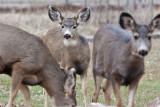 7734 Deer