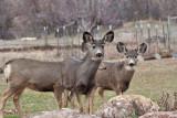 7735 Deer