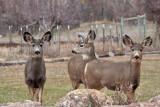 7739 Deer