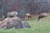 7746 Deer