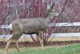 7748 Deer