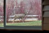 7750 Deer