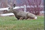 7751 Deer