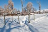 7993 Feb Snow