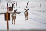 8005 Deer