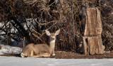 8010 deer