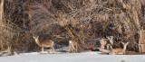8018 deer