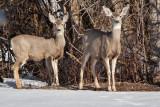 8019 deer