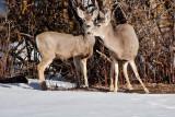 8022 deer