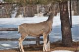 8023 deer