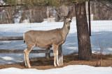 8024 deer