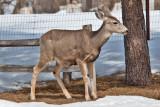 8025 deer
