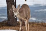 8026 deer