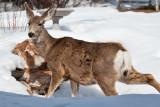8028 deer