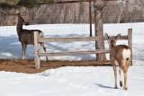 8031 deer
