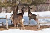 8033 deer