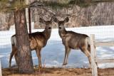 8034 deer