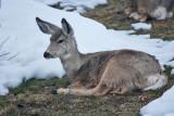 8054 Deer