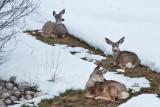 8060 Deer
