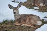 8061 Deer