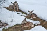 8063 Deer