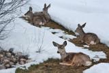 8067 Deer.jpg