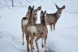 8068 Deer.jpg