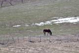 8177  Neighbors horse