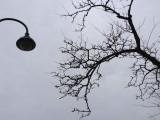 3/13/13 Winter Sky