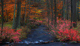 Ringwood Manor Stream