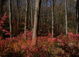Forest Blooms.jpg