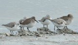 Seaside Shorebirds
