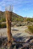 Arizona Images Gallery X