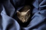 Fanny the cat