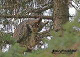20121112 463 Great Horned Owl.jpg