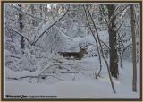 20121228 292 SERIES - White-tailed Deer4.jpg