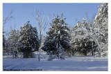 20121228 308 Winter Wonderland.jpg