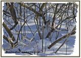 20121228 318 Snowshoe Hare 1r3.jpg