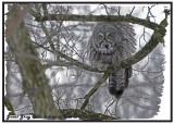 20130112 214 Great Gray Owl.jpg