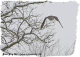 20130119 095 SERIES -  Great Gray Owl.jpg