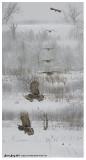 20130119 326 Great Gray Owl 326 - 335 copy 1r1.jpg